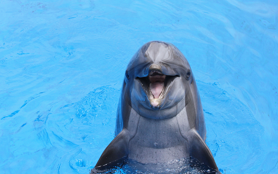 dolphins make terrible doulas